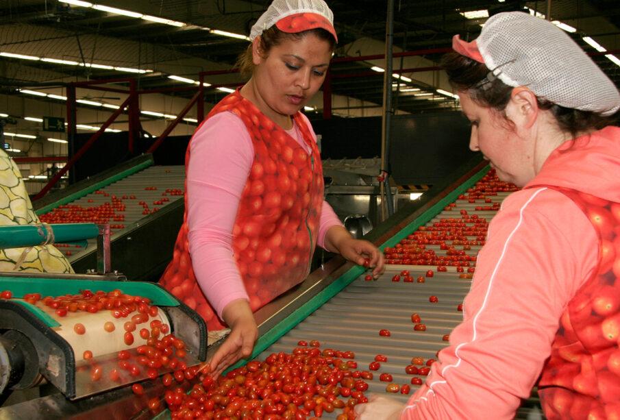 Trabajadoras en una planta hortofrutícola en Almería