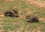 Osos en Cabárceno (Cantabria)
