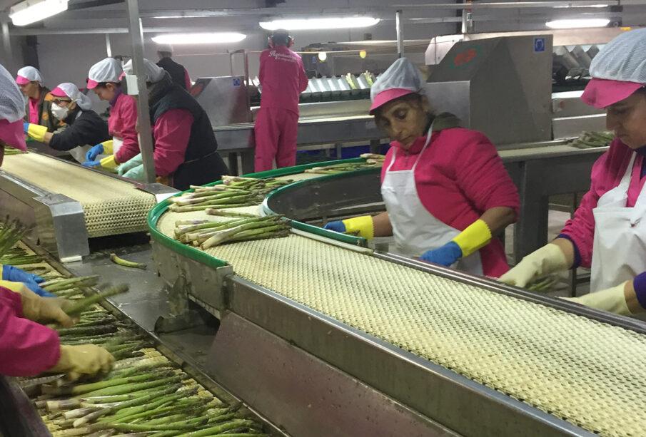Trabajadoras en una planta de envasado de hortalizas.