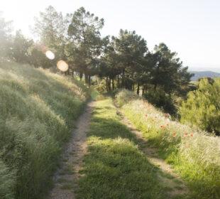 Camino rural en Aragón