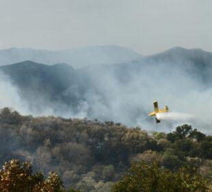 Incendio forestal - CC Y no logro comprender