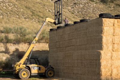 Un trabajador realizando tareas peligrosas en una explotación agraria.