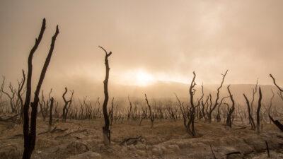Sequía en Indonesia.
