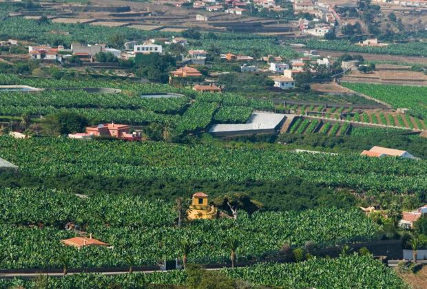 Paisaje en el Valle de la Orotava, en Tenerife