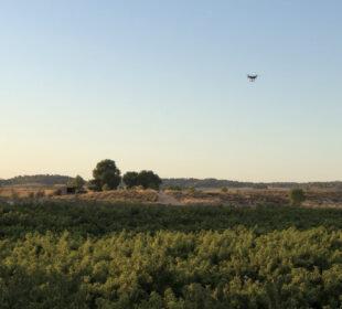 Un dron dobre vuela un campo de melocotoneros, en Teruel.