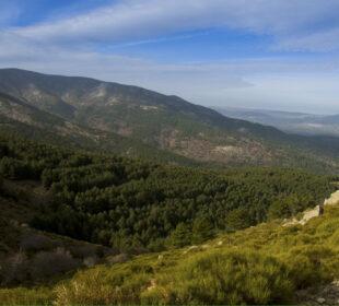 Bosque en el Valle de Iruelas (Ávila)