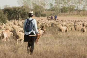 Una mujer cuidando un rebaño de ovejas y cabras. Foto: EDR