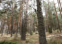 Bosque en Orea (Guadalajara)