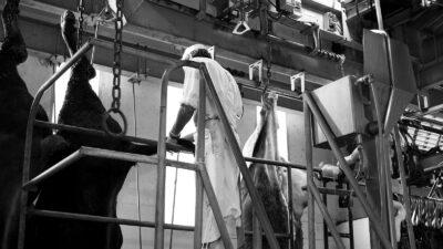 Un hombre, trabajando en un matadero en la provincia de Zamora. Foto: El Diario Rural.