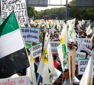 Movilizaciones en defensa del sector del aceite, el pasado mes de octubre, en Madrid.