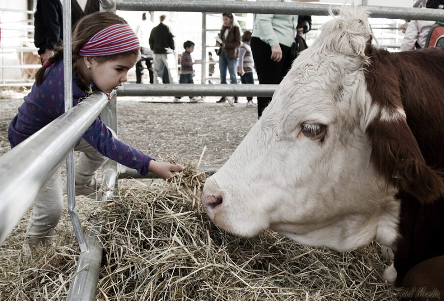 Feria de ganado, en Biescas. fidelmendia. Creative commons.