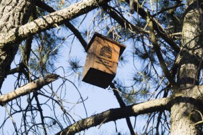 Caseta para aves insectivoras, en la comarca de Cariñena (Zaragoza)