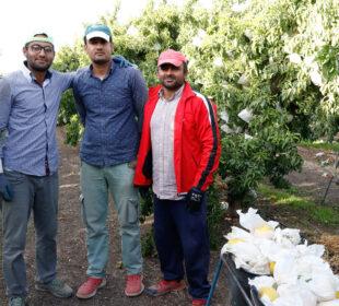 Foto destacada: Trabajadores de origen paquistaní hacen una pausa mientras recogen melocotones en la provincia de Teruel. Foto: Joaquín Terán.