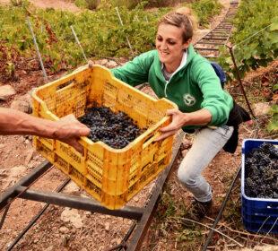 Paula González Fernández La fuerza de las mujeres del rural Viñedo de San Pedro de Amandi de Adega Malcavada (Sober, Lugo, Galicia)