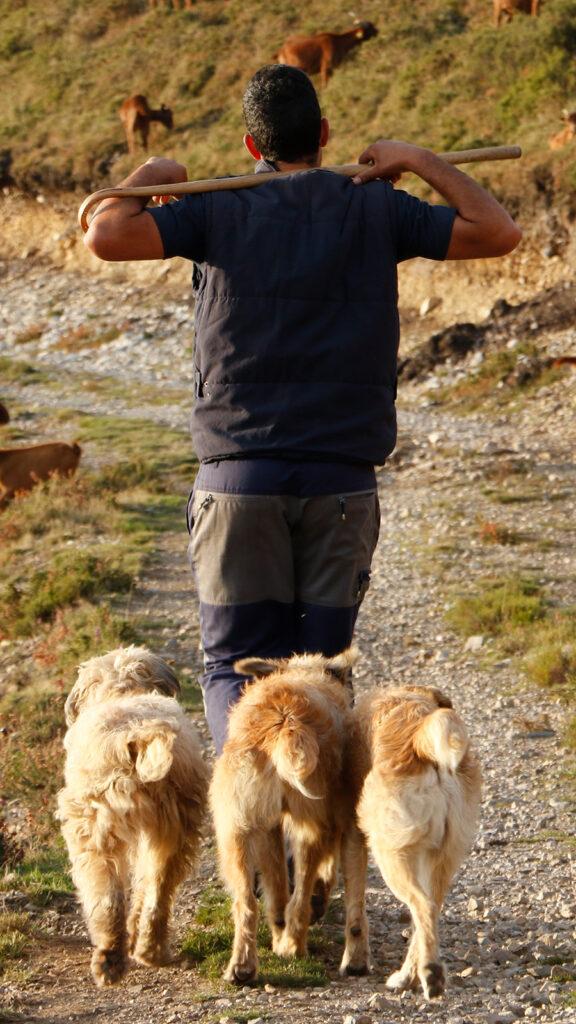 Perros pastores, junto a su amo, en el Pozo de las Mujeres Muertas (Asturias). Foto: Joaquín Terán.