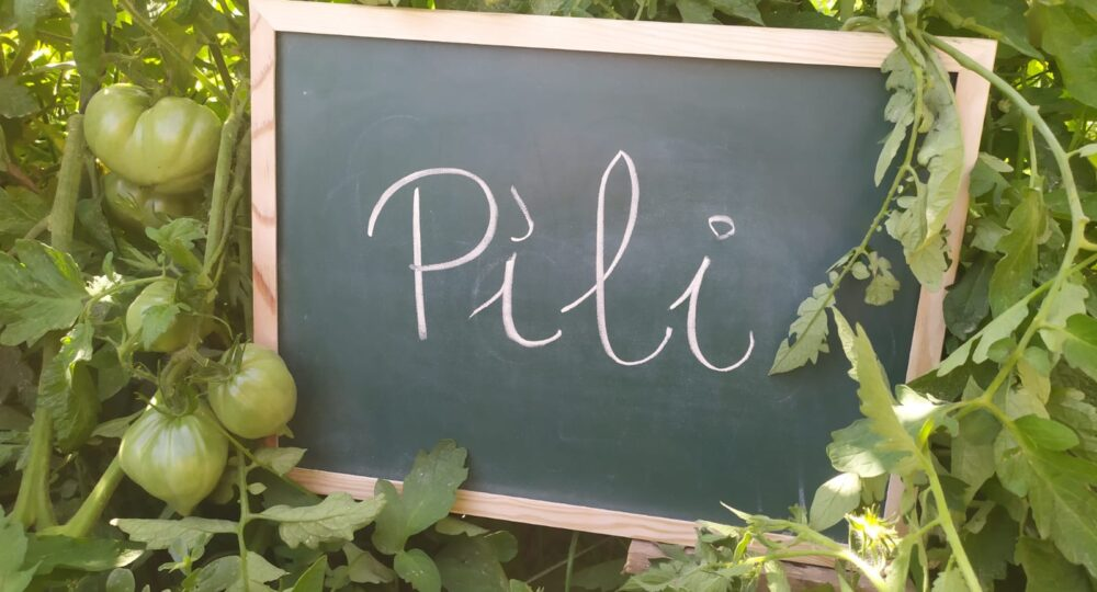 La tomatera de Pili. Por Eduardo Moyano