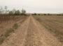 Un camino rural, en Palencia.