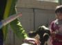 Una ganadera cuida a sus vacas junto a una niña.