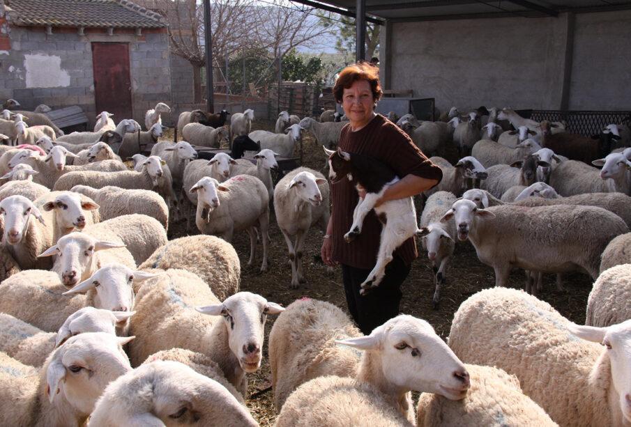 Una ganadera, con sus ovejas.