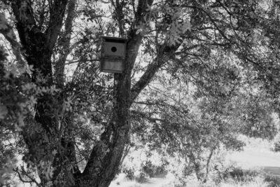 Un refugio para aves, en un bosque mediterráneo.