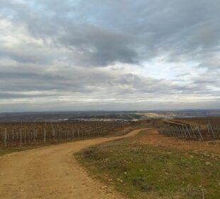 Camino entre viñedos en La Rioja.