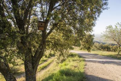 Jaula nido en un árbol, en Paniza (Zaragoza).