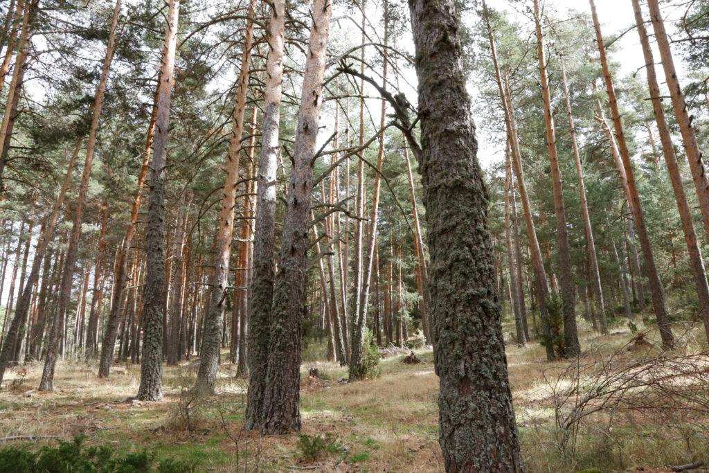 Un bosque, en la provincia de Guadalajara.