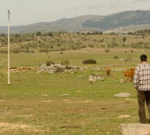 Ganaderos en El Barraco (Ávila).