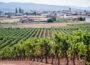 Un viñedo en La Rioja. Autor: Miquel Lleixà Mora. Creative commons