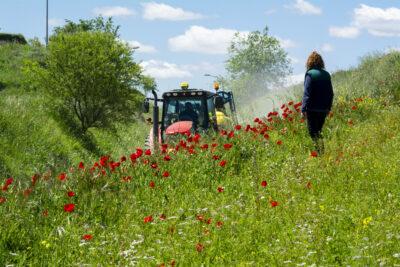 Agricultores en un margen floral junto a parcelas de cereal en Anchuelo (Madrid), uno de las prácticas agrarias contempladas en los 'ecoesquemas'. Foto: EDR.