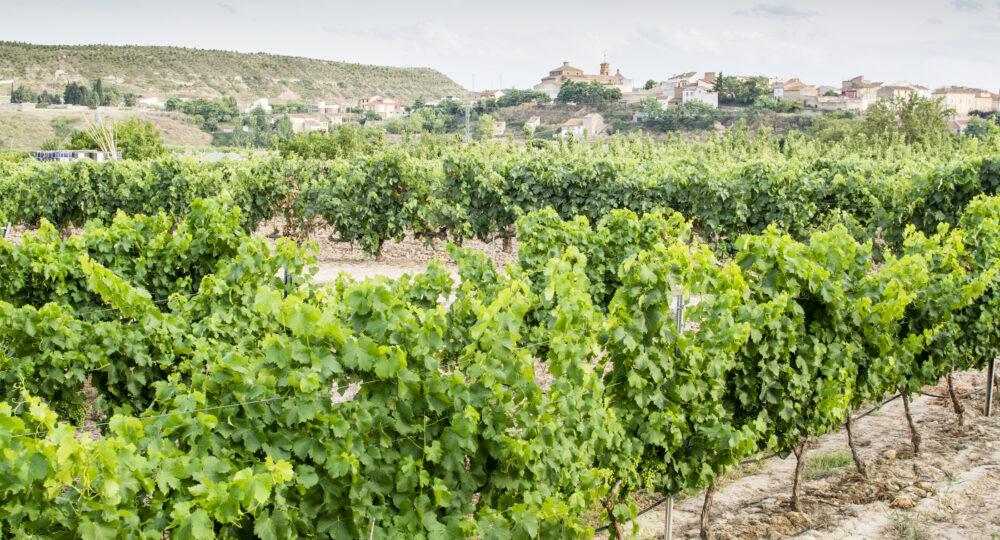 Viñedos en Alcanadre (La Rioja). Foto: EDR.