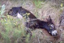 Captura del vídeo de Frank de la Jungla en el que se ve a un burro fallecido. Foto: Youtube Frank de la Jungla.